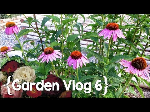 The Beginnings of a Medicinal Herb Garden ║ Garden Vlog Ep. 6 │ Large Family Vlog