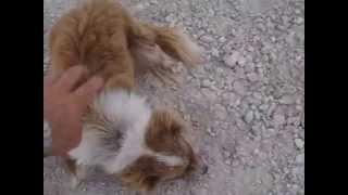 Pies bezdomny który szukał domu.