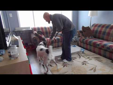 Teach Your Dog the Place Command Part 1 - K9 Heights Dog Training