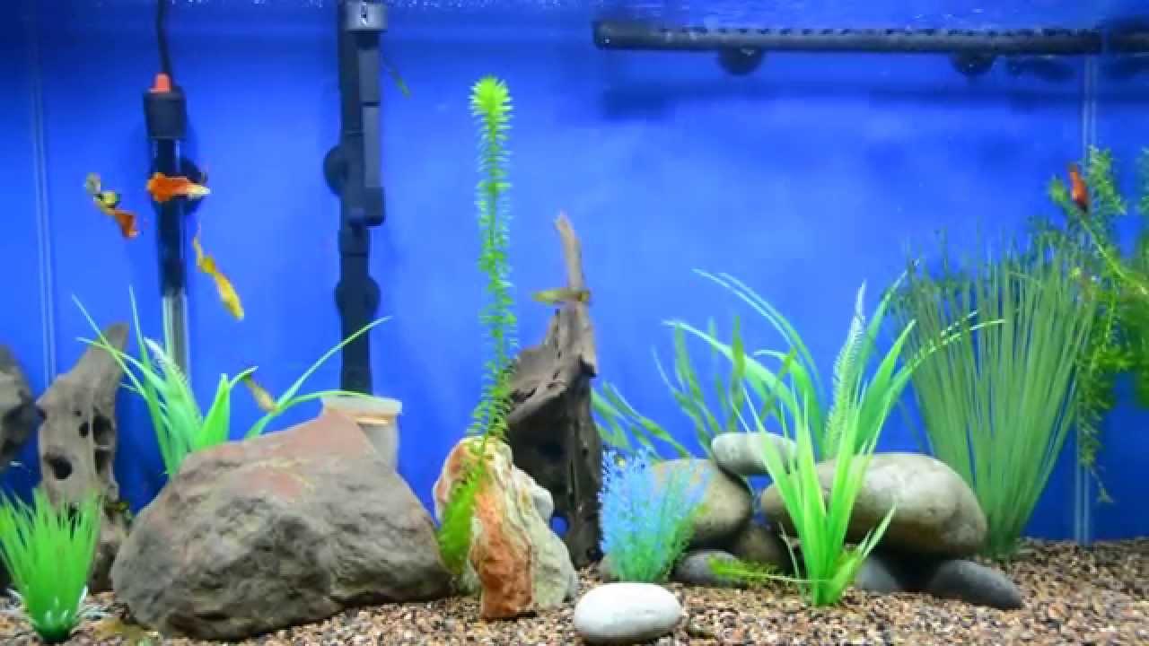 Aquarium fish tank setup - Amazing 29 Gallon Guppies Fish Tank With Led Setup
