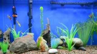Amazing 29 Gallon Guppies Fish Tank With Led Setup