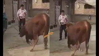 Mất mùa phải bán bò, con vật quỳ rạp rơi nước mắt khiến chủ cúi đầu hối hận