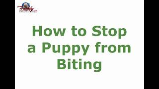 How to Stop a Puppy from Biting | Top Tips