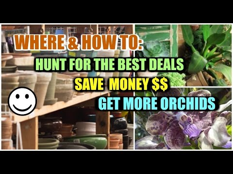 Save $$ Buy More Orchids! Tips, Haul & Blooperz