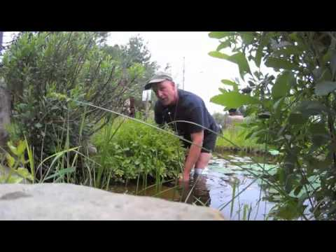 plante aquatique fitch bay