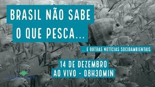 Brasil não sabe o que pesca e outras notícias socioambientais - VERDE MAR #105