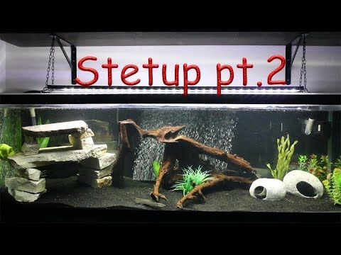 100 Gallon Predator Fish Tank Setup Part 2