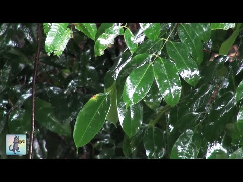 ✧ Amazon Jungle Rainstorm • Rain & Thunder Sounds • 3 HOURS • 1080p HD ✧