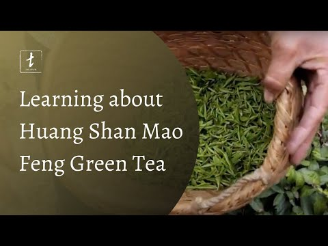 Huang Shan with Tea Drunk