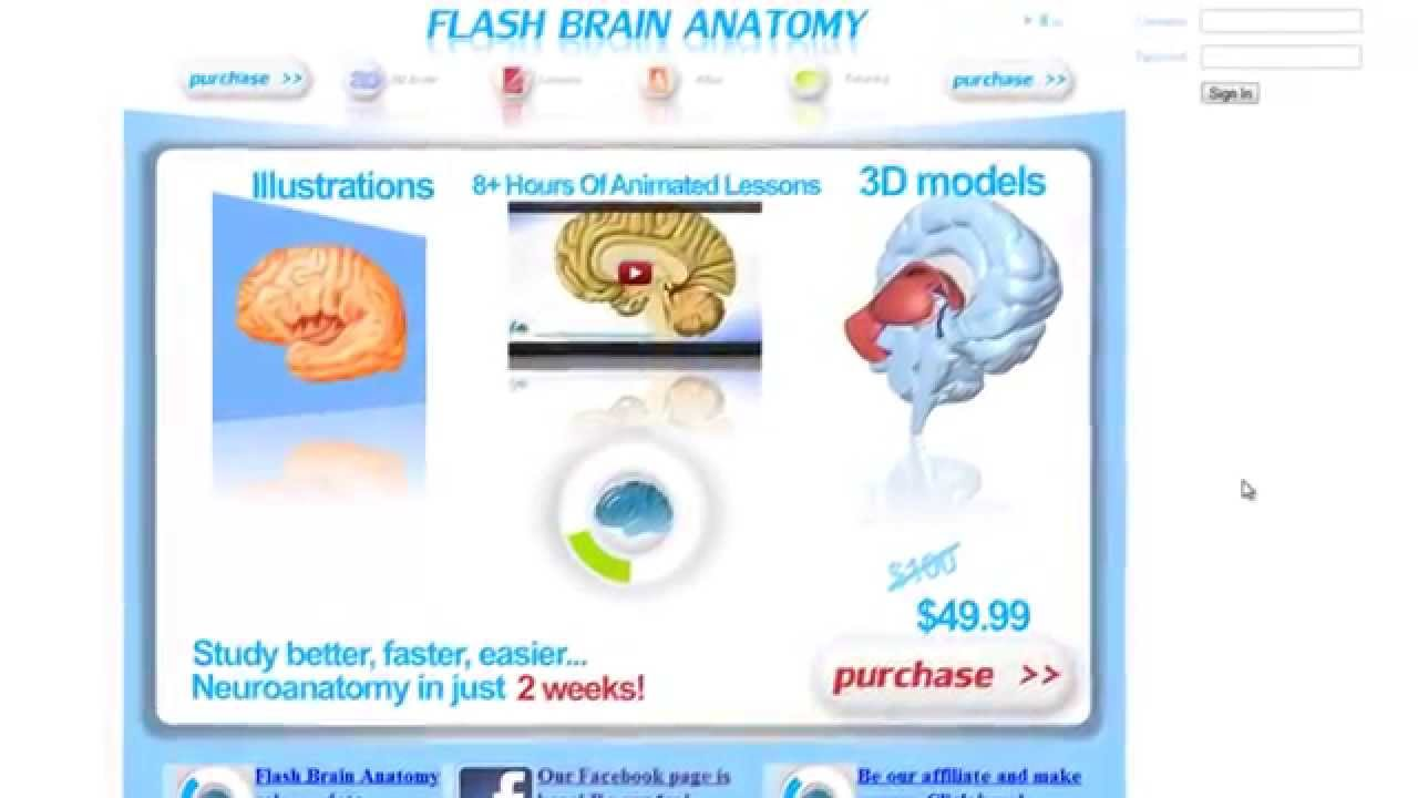 Best Flash Brain Anatomy-3D Brain Anatomy Software-3D Brain Anatomy ...
