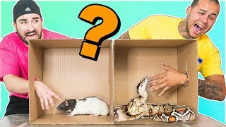 Whats in the box CHALLENGE !!!! (ANIMALS) thumbnail
