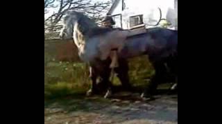 Родео или синяя объездка коня.
