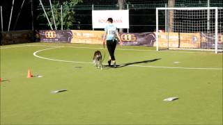 Maria Rally Obedience Dog Olympic Games 2012