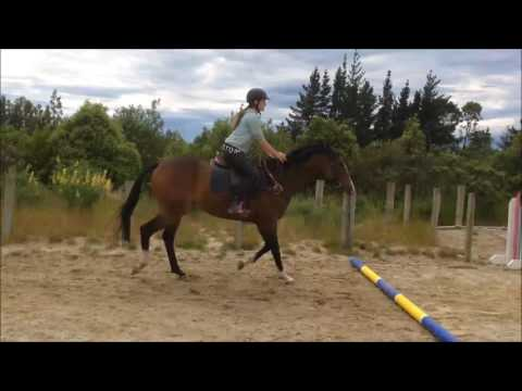 Eva learning to jump with working pupil Kayla