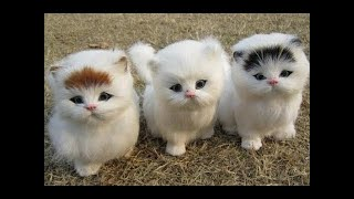 Funny Cats And Dogs Videos | Cute Dogs Cats And Animals Compilation | Try Not To Laugh Challenge