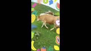 Efsane çoban 4