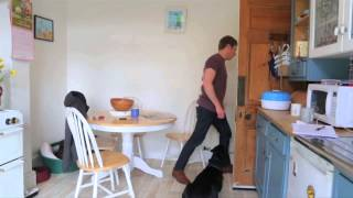 Teaching Your Dog Good Manners Towards House Guests.