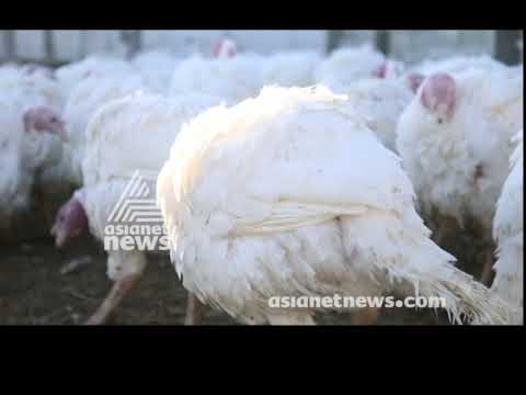 Americans Get Ready for Thanksgiving 2018 |America ee Aazhcha 20 NOV 2018