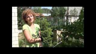 Опрыскиваем калину от черной тли. Сайт sadovymir.ru(, 2012-06-04T13:48:07.000Z)