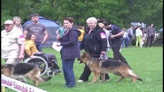 GN 26 06 2017 Выставка собак на кубок НЯ 2017 на стадионе РМЗ