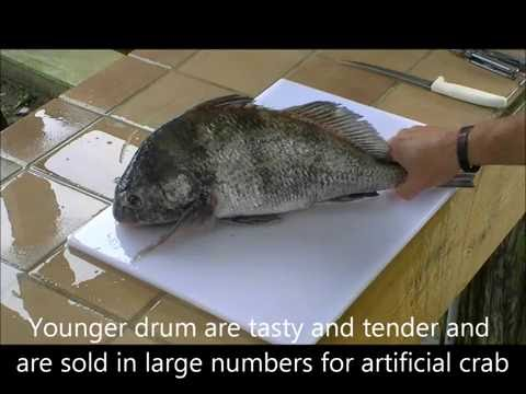 How To Fillet Black Drum Quickly