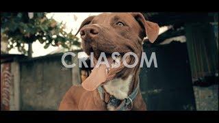Baixar CriaSom | Delacruz - Quem Diria (Prod. GU$T)