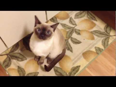 My tonkinese cat sounds like an alien