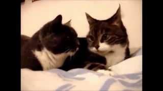 Коты говорят с нами