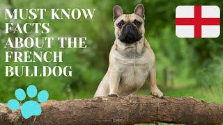 Getting To Know Your Dog's Breed: French Bulldog Edition