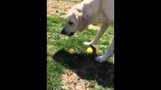 My Dog's Annual Easter Egg Hunt Thumbnail