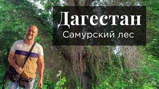 Опасный Дагестан. Самурский лес - страшный лес. Кавказский узел. Дагестан сегодня.