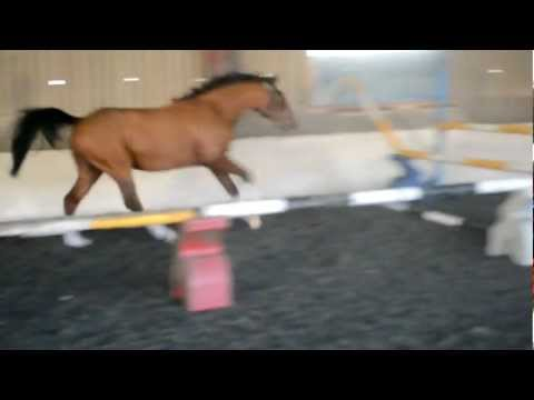 Ragzz to Riches (Marley) Free jumping Feb 2012