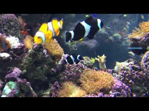 Aquarium of Pacific 024 Tropical Pacific 23 April 2015