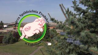 Rolnicza Spółdzielnia Produkcyjna w Lubosinie