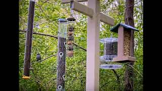 Preview of stream Westmintser, Birdfeeder Cam