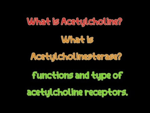 What is Acetylcholine? What is  Acetylcholinesterase? functions and type of acetylcholine receptors.