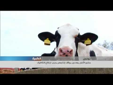 منتجو الألبان في تونس يهددون بوقف إنتاجهم  - نشر قبل 15 ساعة
