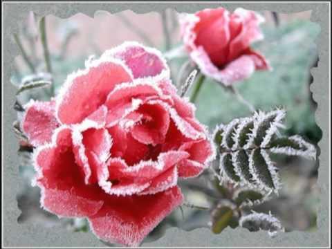 Осенние цветы.mpg