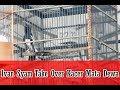 Suara Burung Kacer Mata Dewa Resmi Dipinang Ivan Syam Royal Sakura  Mp3 - Mp4 Download