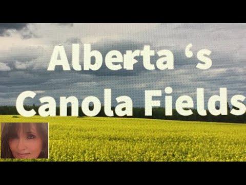 PHOTOGRAPHING CANADA ( ALBERTA 'S  CANOLA FIELDS)