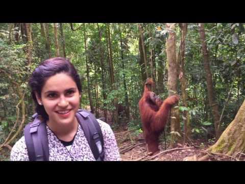 Indonesia - Bukit Lawang - Orangutans!