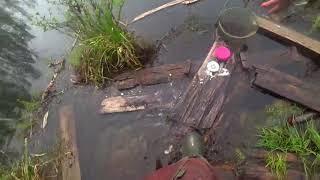 Ловля карася на лесном озере! Рыбалка на поплавок