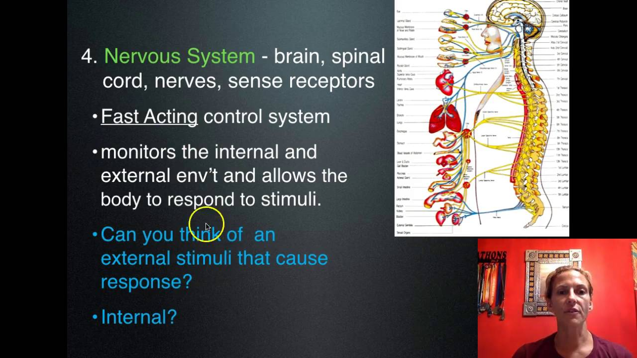 11 Human Body Systems - YouTube