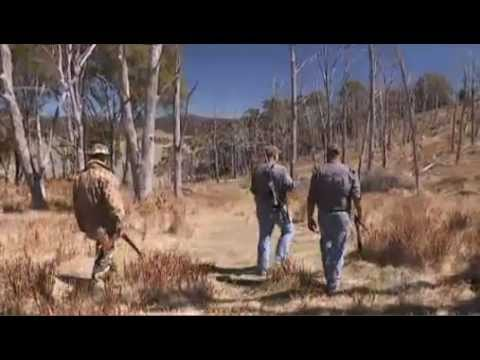 Fox Hunting In Australia - Conservation Management