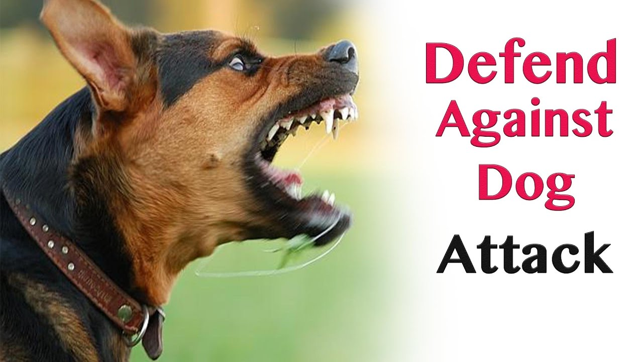 How To Defend Against A Dog Attack Video