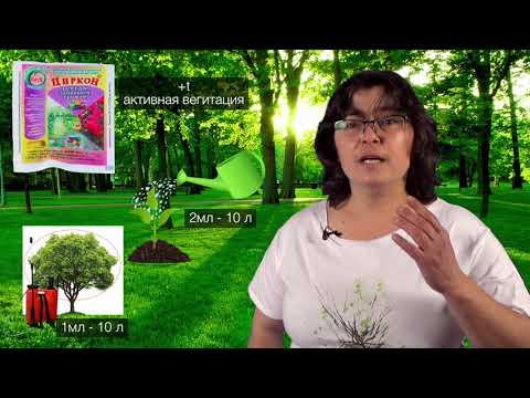 Циркон и Эпин - антистрессы для растений.