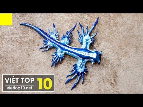 Top 10 Loài Động Vật Kỳ Lạ Nhất Hành Tinh