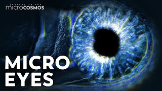 Can Microbes See Without Eyes?