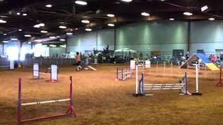 L'eau Akc Masters Standard April 12, 2014