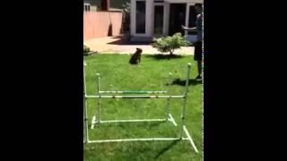 Long Island Dog Training - Sublime K9
